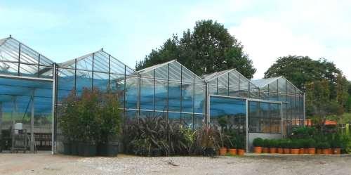Draycott plant nurseries